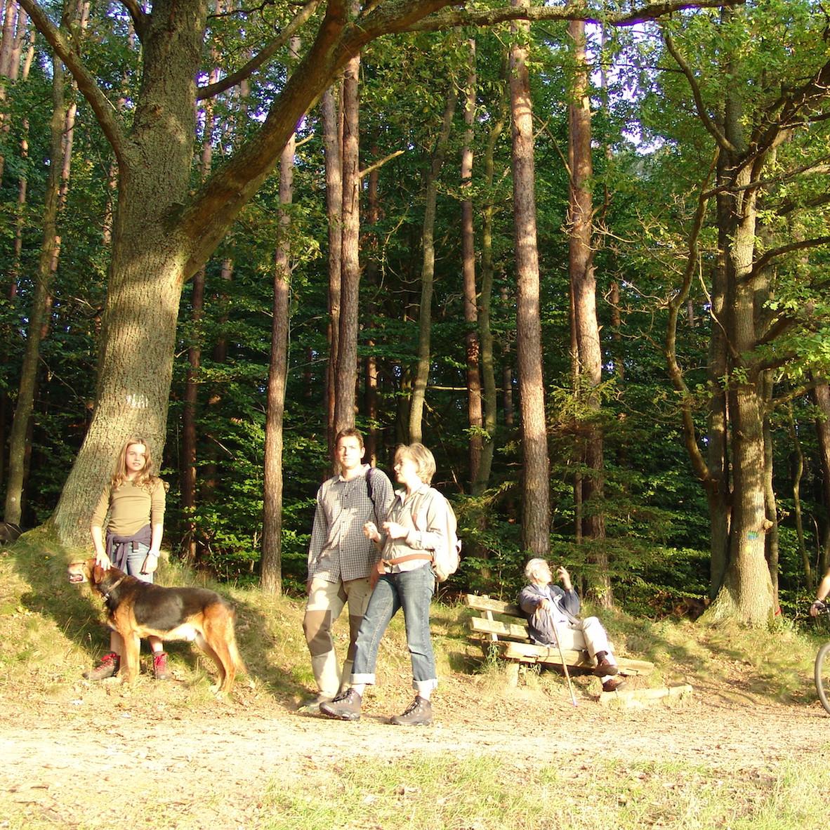 Pfälzerwald Wandern